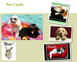 greeting cards from send out cards pet profession